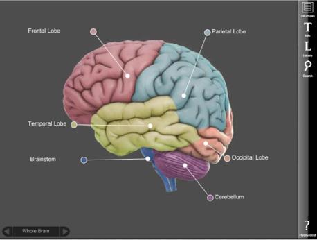 App – 3D-Brain